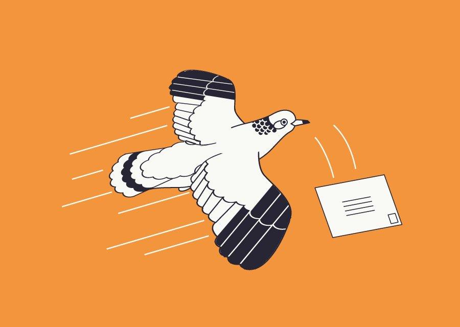Pitch Tents pigeon illustration